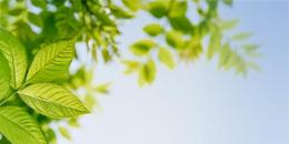 environmental-inclusion